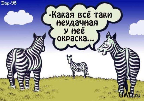 Неудачная окраска у зебры