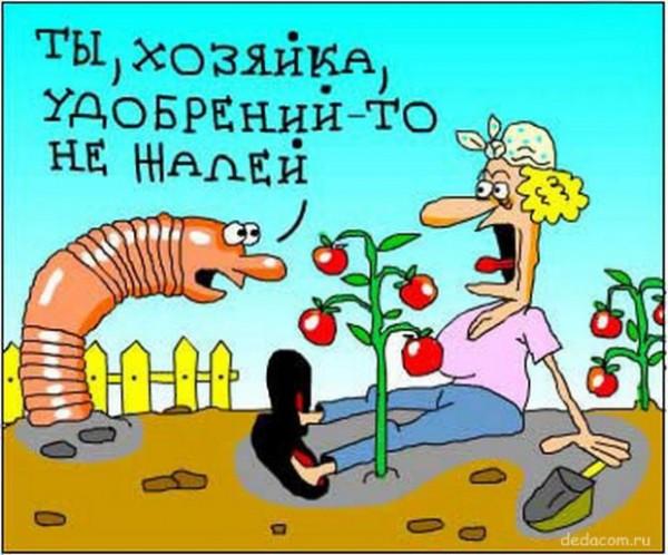 "Карикатура ""Не жалей удобрения"""