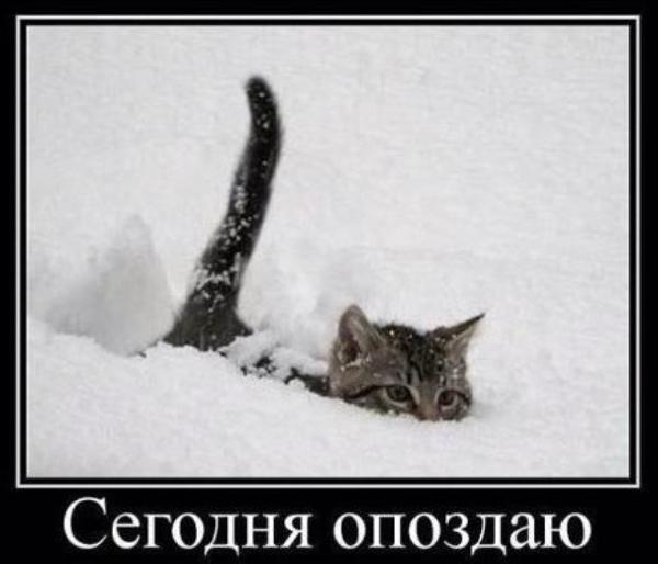 "Прикол ""Причина опоздания у котенка"""