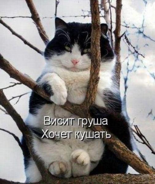 9bOoc_Zbva8