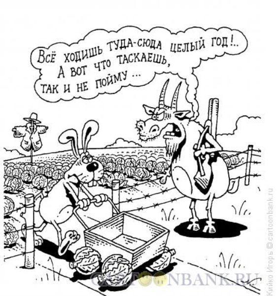 Смешное фото Что таскает заяц