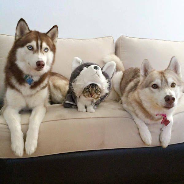 """Смешное фото """"Собаки и маленький котенок"""""""