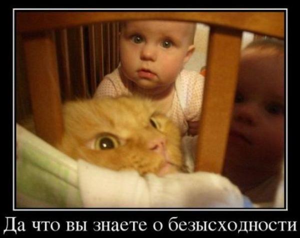 """Демотиватор """"Безысходность для кота"""""""