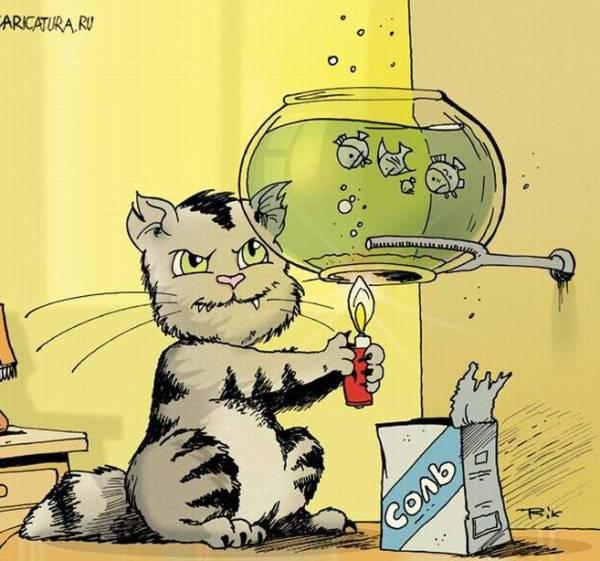 Кот варит рыбу в аквариуме