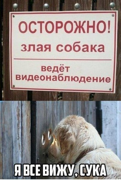 Смешное фото Злая собака ведет видеонаблюдение