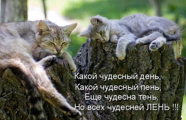 Смешное фото чудесного дня у котов