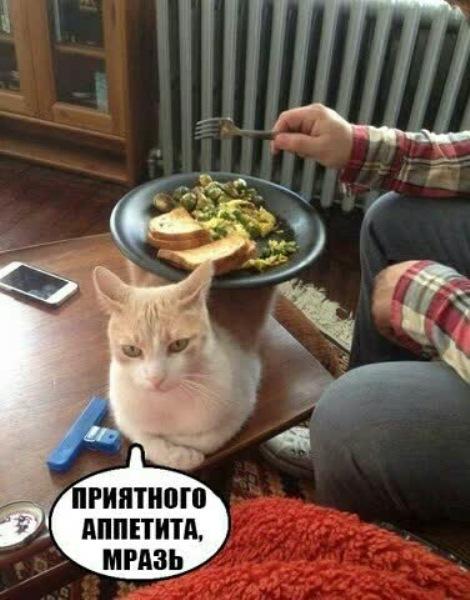 Приятного аппетита, мразь