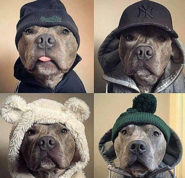 """Смешное фото """"Имидж для собаки"""""""