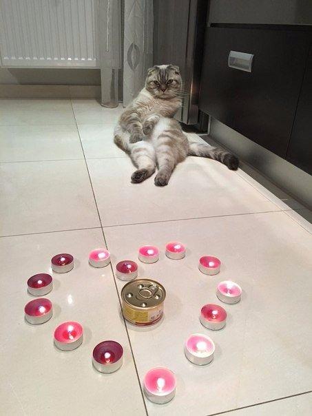 Смешное фото 14 февраля с котом