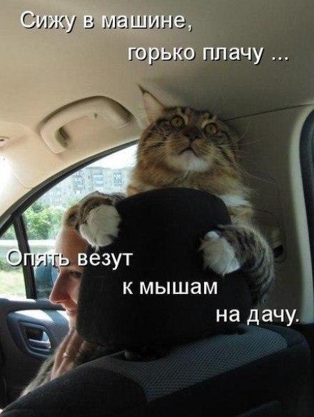 Смешное фото Кот в машине