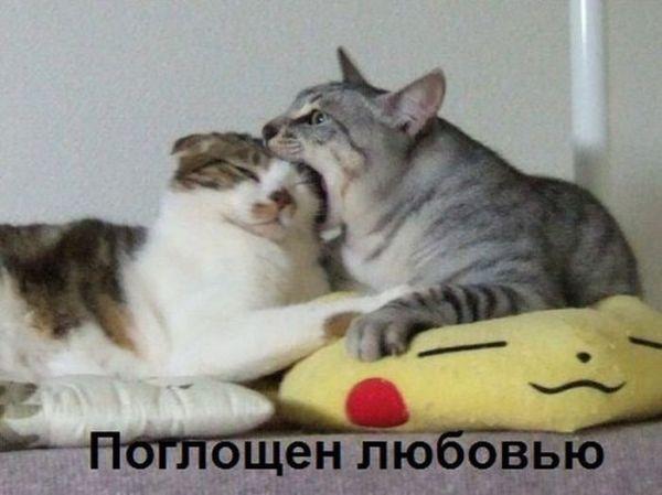 Смешное фото Поглощен любовью