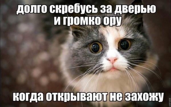 Смешное фото про кота