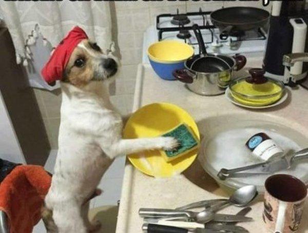 Смешное фото Собака моет посуду