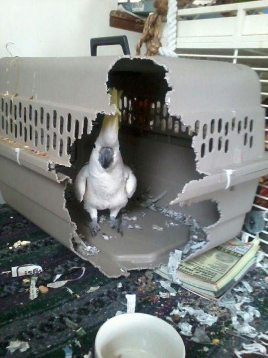 Свободу попугаем!