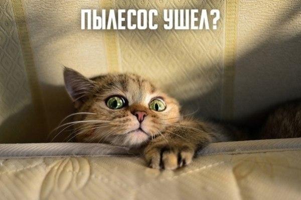 """Смешное фото """"Кот боится пылесоса"""""""