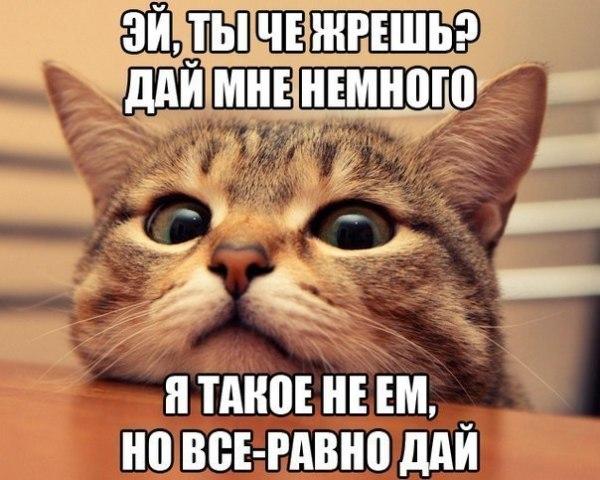 """Смешное фото """"Кот - попрошайка"""""""