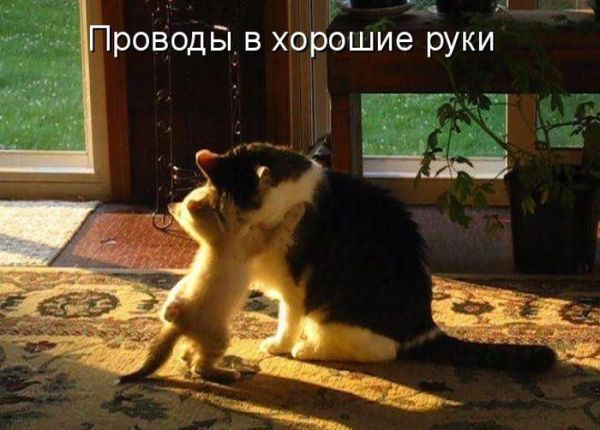 1411299470_kotomatrix_33