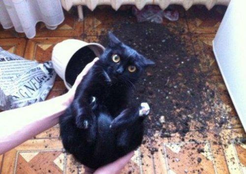 Кот разбил горшок