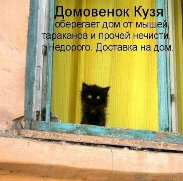 """Смешное фото """"Кот домовенок кузя"""""""