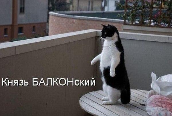 """Смешное фото """"Кот Князь балконский"""""""