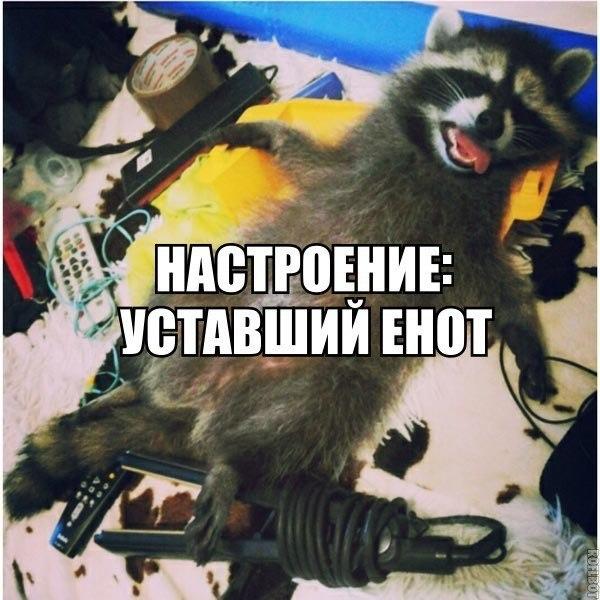 Смешное фото Тип настроения