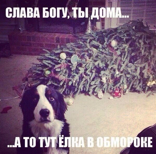 TGEe5CgNobY