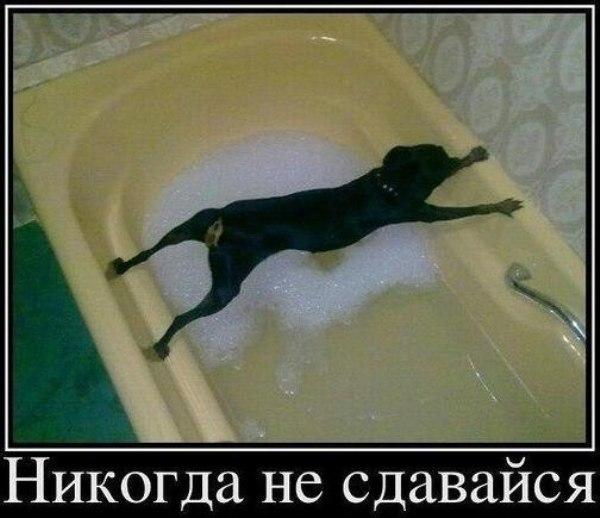 Смешное фото Собака в ванной