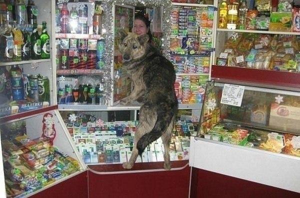 Смешное фото Необычный покупатель