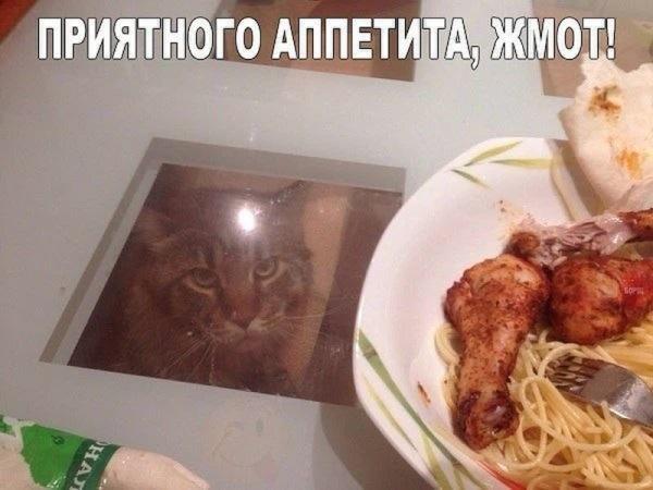 Приятного аппетита, жмот