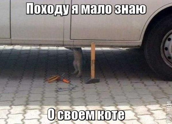 Смешное фото Кот чинит автомобиль