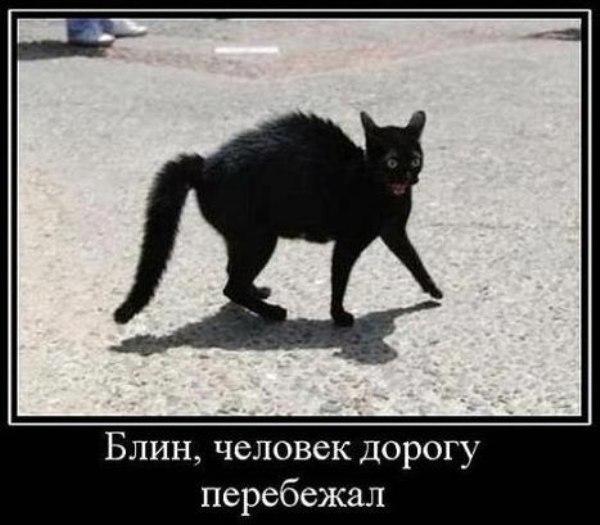 Демотиватор Чего боится черная кошка