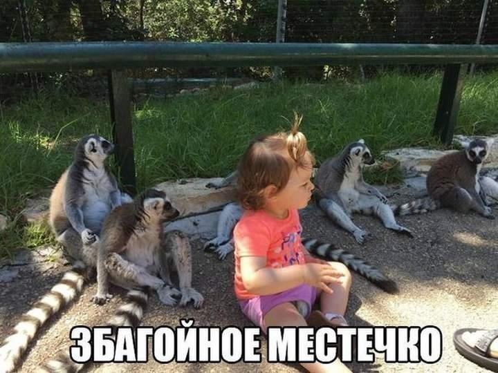Смешное фото Збагойные лемуры