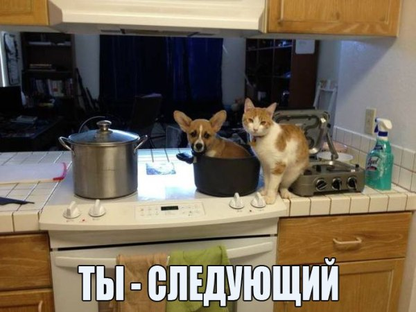 Смешное фото Кот и собака в кастрюле